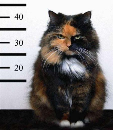 lineup_cat